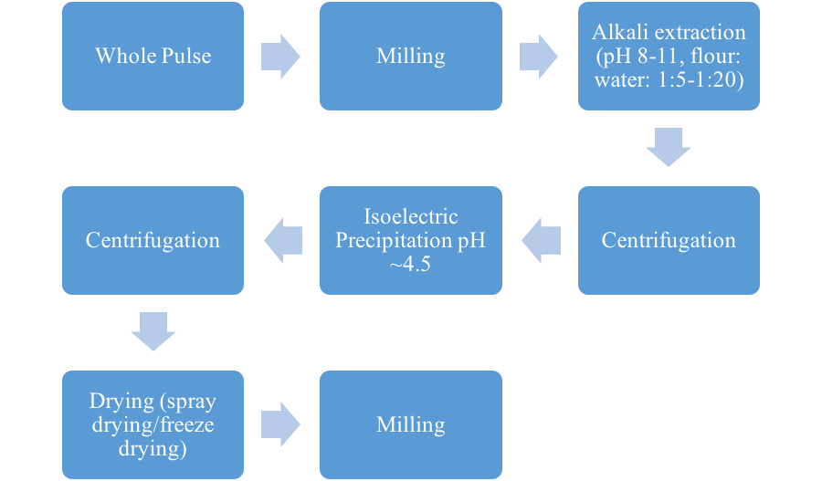 Diagram of the alkaline extraction and isoelectric precipitation process: Whole pulse, to milling, to Alkali extraction (pH 8 to 11, flour:water ratio of 1:5 to 1:20), to centrifugation, isoelectric precipitation (pH approximately 4.5), to centrifugation, then drying (spray drying or freeze drying), then finally milling