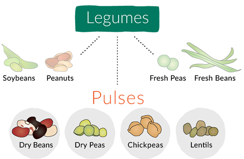 Illustrated chart showing that Pulses (Dry beans, dry peas, chickpeas and lentils) are a subset of Legumes.